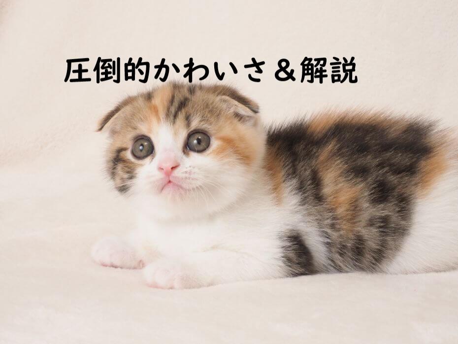 kawaii 子猫