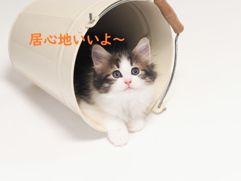 家 居心地 子猫