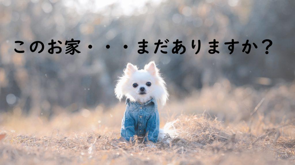 チワワ 子犬 冬 家買う