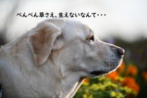 しょんぼりする犬