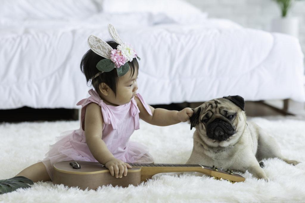 パグ(犬)と赤ちゃん