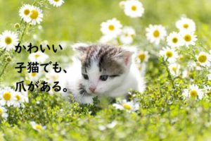 子猫 たくさんのお花に囲まれて