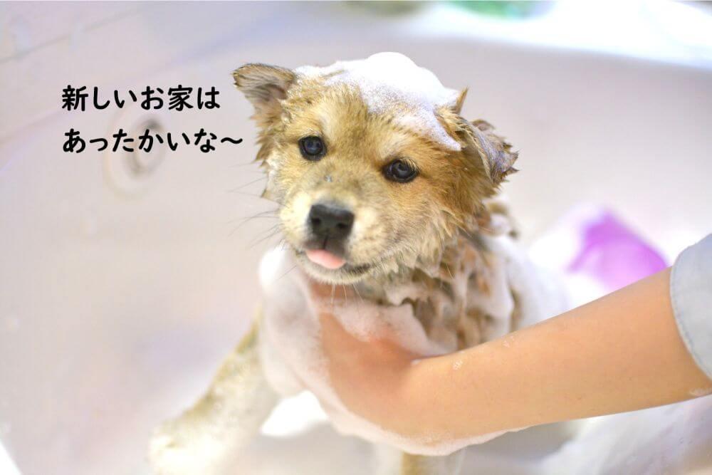 シャンプー 子犬