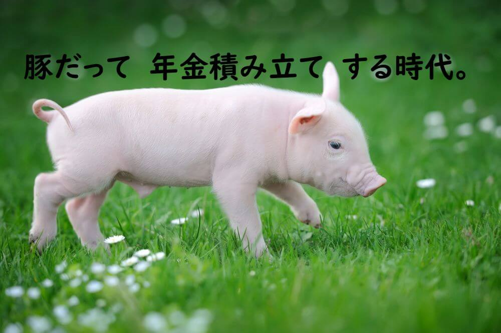 子豚の散歩