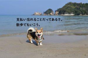 犬と海 砂浜