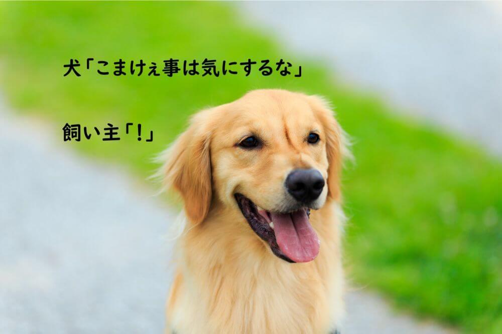 犬 イッヌ 笑顔