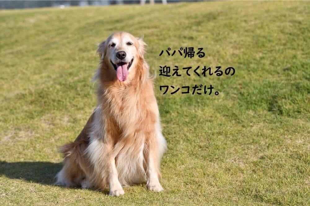 笑うワンコ 大型犬