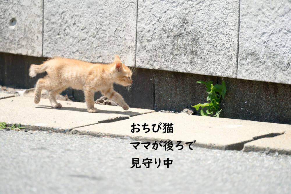 チビ猫 散歩 草