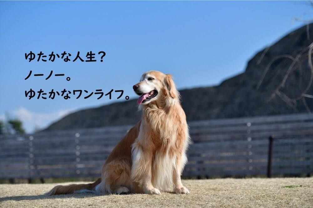 レトリバー 犬 山