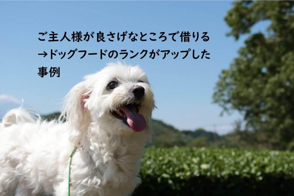 白い犬 笑う