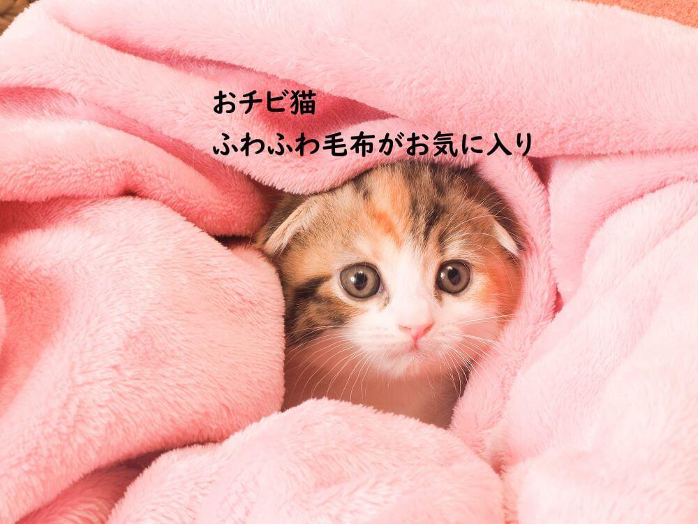 おチビちゃん 子猫 毛布